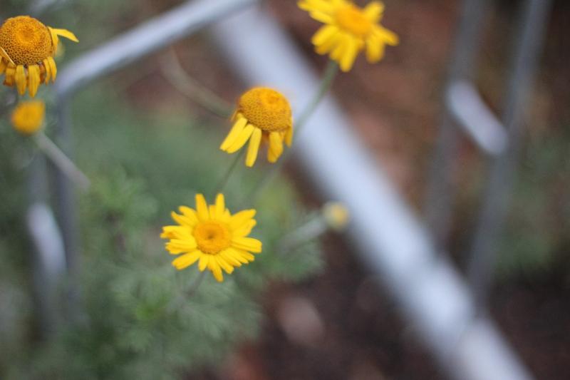 Farbspiel im Herbst (2011) | Foto: Sarah Anna Busch
