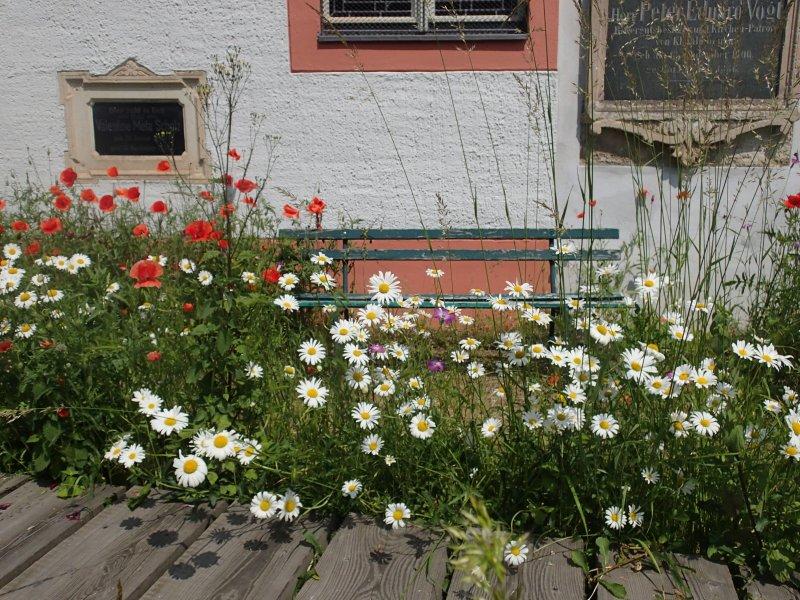 Blütenpracht (2013) | Foto: Heike Sichting