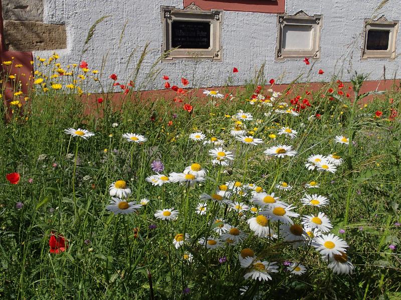 Blumenwiese I Foto: Heike Sichting