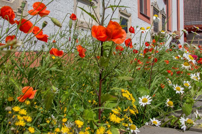 Blumenwiese I Foto: Holger Simmat