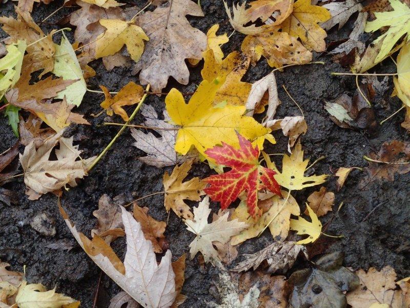 Herbstlaub (2014) | Foto: Heike Sichting