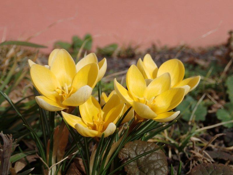 Erste Blüten... | Foto: Heike Sichting
