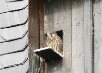 Falke zu Besuch (2010) | Foto: Heike Sichting