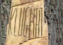 Klugheit (2009) | Foto: Siegfried Adaschkiewitz