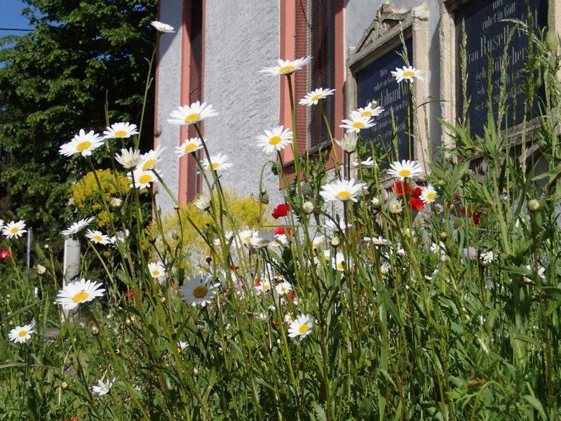 Blumenwiese Anfang Mai (2014) | Foto: Heike Sichting
