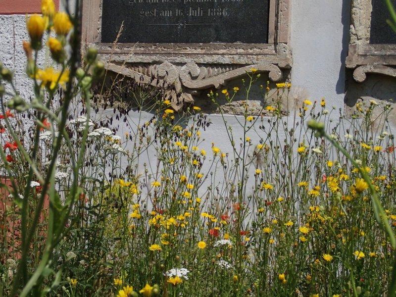 Blumenwiese Mitte Juni (2014) | Foto: Heike Sichting