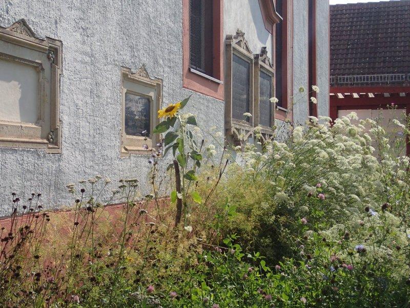 Blumenwiese im Juli (2014) | Foto: Heike Sichting