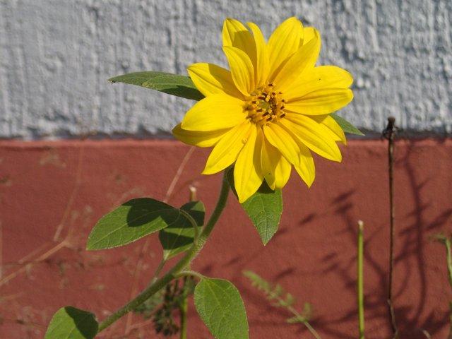 Sonnenblume (2014) | Foto: Heike Sichting