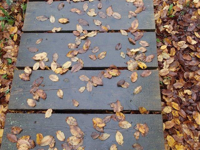 Herbstlust (2014) | Foto: Heike Sichting