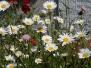 Neues von der Blumenwiese
