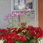 Blumenspende Gärtnerei Gordelt | Foto: Heike Sichting