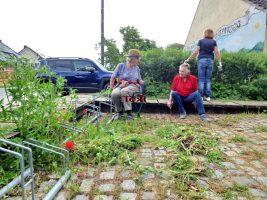 Verspäteter Frühjahrsputz (Juni 2021) | Foto: Siegfried Adaschkiewitz